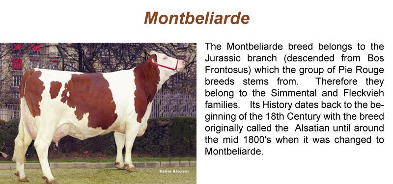 montbeliarde-sl