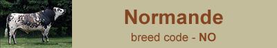normande-bulls