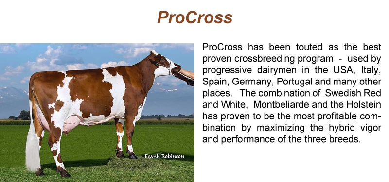 procross_sl